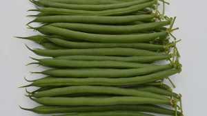 New Green Bean Variety From Seminis