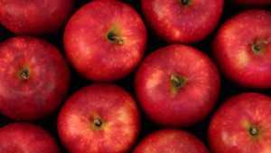 New Washington State University Apple Named Cosmic Crisp