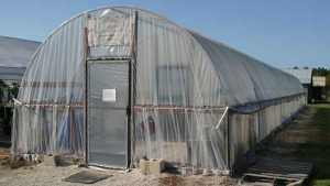 New Source For High And Low Tunnel Berry Growers
