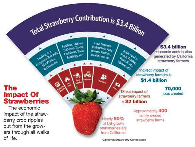 california-strawberry-economic-contribution