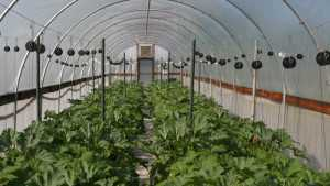 Crop Production High Tunnel iBook Now Available