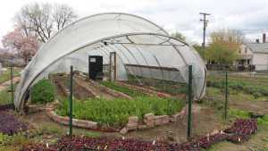 High Tunnels Offer Real Competitive Advantages For Your Crop [Opinion]