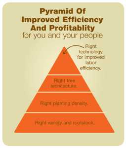 Mario's-pyramid-of-improved-efficiency-and-profitablilty