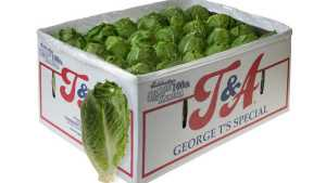 Tanimura & Antle Introduces New Lettuce Variety