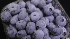 Study Zeroes in on Sweet Spot for Florida Blueberries