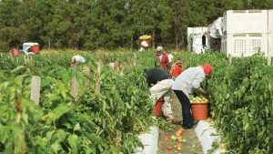 Border Crisis Not Helping Farmers