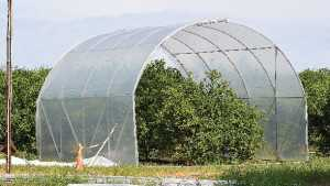 Florida Citrus Grower Keeps His Cool In The Heat Of HLB
