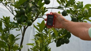 Sharing Is Caring When It Comes To Curing Citrus Greening