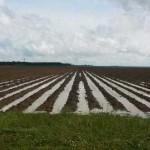 Flooded farm field in Florida