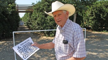"""For Bob McKellar, agritourism is more than just a destination. His orange maze was intentionally designed for a first-hand look at fruit growing. """"People can come and see what their food really looks like, and how it grows,"""" he says. (Photo credit: David Eddy)"""