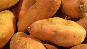 Northeast Poised To Increase Sweet Potato Production