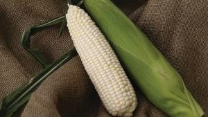 Abbott & Cobb Showcases Latest Vegetable Varieties For Florida
