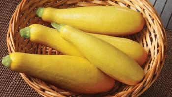 Goldprize zucchini