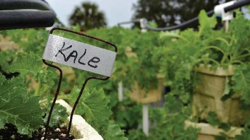 National Kale Day Gains Momentum