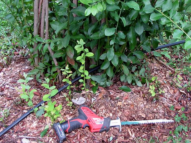 The owners of Windrush Farm in Newport, VA, purchased a small hand-held, 12 volt, lithium-ion powered reciprocating saw with 9-inch quick-change pruning blades to cut the basal stems of crowed center portions.