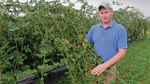 Top 10 Things Berry Growers Need To Do Before 2015