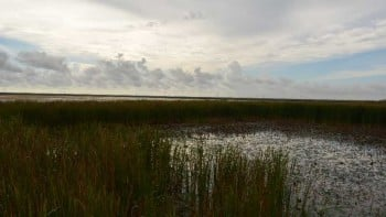 Florida Everglades swamp