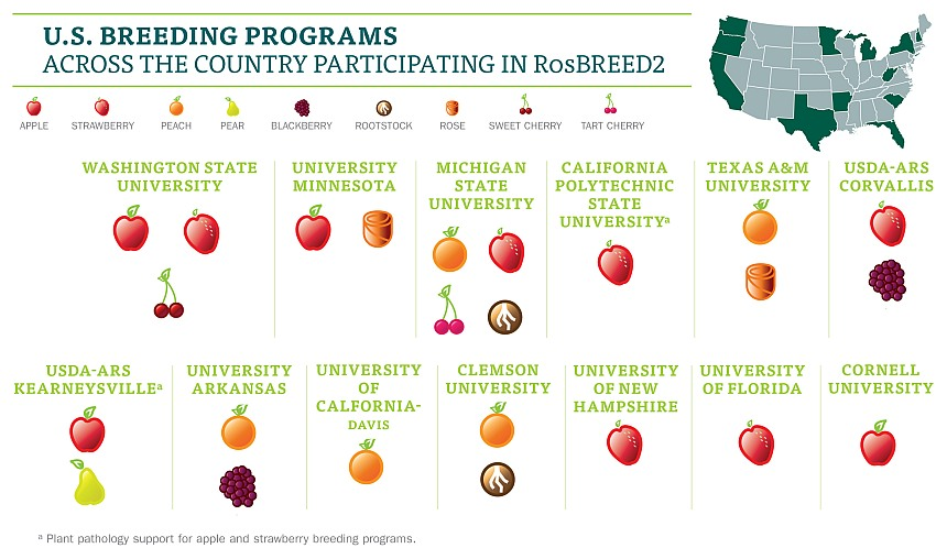 RoseBREED programs