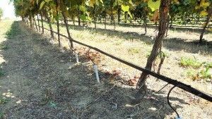 Washington Winegrape Research Feted