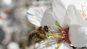 Tips To Keep Bees Safe When Using Pesticides