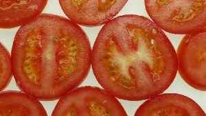 Three Tomato Breeding Lines Approved For Release
