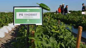 Seminis Hosts Growers For Its 2014 Southeastern Field Day