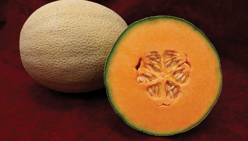 New Tools To Guide Harvesting Long Shelflife Melons