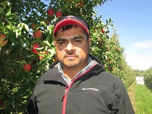 Jose Iniguez is the orchard manager at Lamont Fruit Farm Inc., NY.