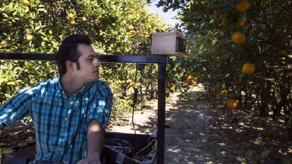 Former UF post-doctoral research associate Alireza Pourreza utilizes the vision sensor he helped to develop to detect citrus greening. Photo courtesy of UF/IFAS