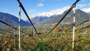 On The Road With The International Fruit Tree Association Study Tour To Italy Part 3 [Slideshow]