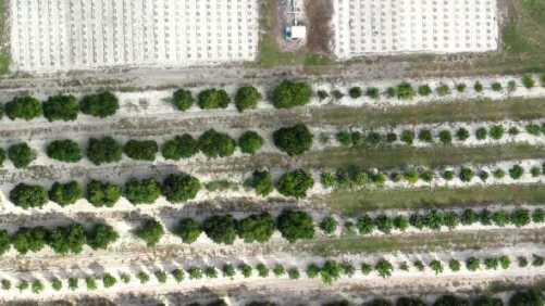 Citrus Growth Path Uncertain as Florida Real Estate Surges
