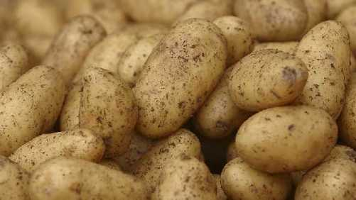New Leaders Elected For Potatoes USA