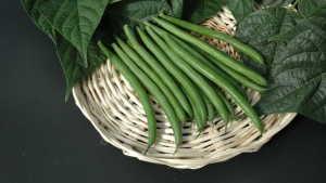 7 Top-Performing Bean Varieties