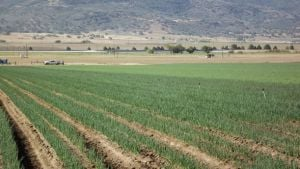 Grower Experienced In Biocontrols Says: Be Patient