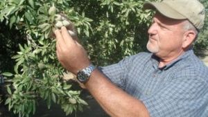 At Paramount Farming, Mating Disruption Pays Off