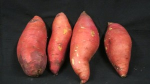 Sweet Potato Options For Midwest Growers