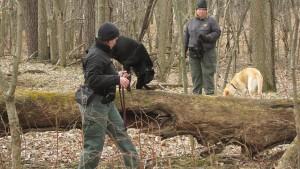 USDA Uses Man's Best Friend To Track Stink Bug