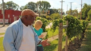 From Riots To Vineyard — A Story of Urban Revival