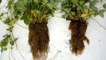 Photo courtesy of Mycorrhizal Applications