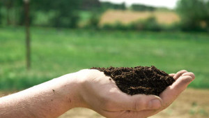 Why Soil Health Should Matter To You