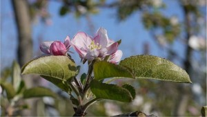 New IPM Tool for Pennsylvania Fruit Growers