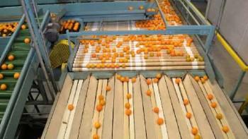 Florida citrus packinghouse