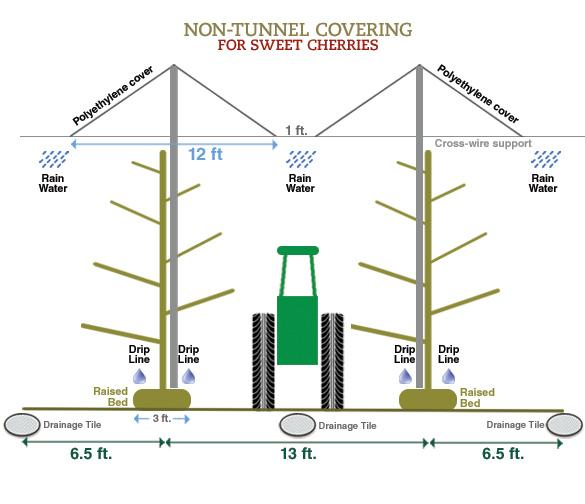 non tunneling covering for sweet cherries chart