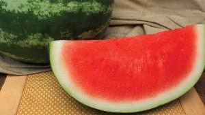 6 Juicy Watermelon Varieties For Florida Growers