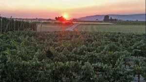 Partnerships Key To Healthy Northwest Vines