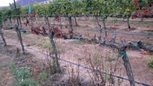 Washington Grape Growers Plan Annual Meeting