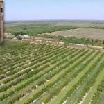 Immokalee< FL, Farm and Grove aerial view