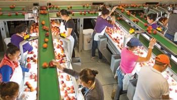 Titan Farms packing line