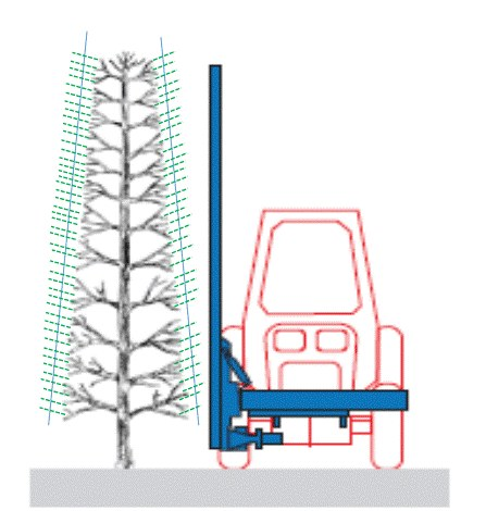 """Figure 2: From the pre-formed """"box"""" shape, shoots (in green color) grow during the season until they are hedged again in the summer. (Graphic courtesy of Mario Miranda Sazo)"""