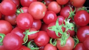 New Hampshire Researchers Develop New Cherry Tomato
